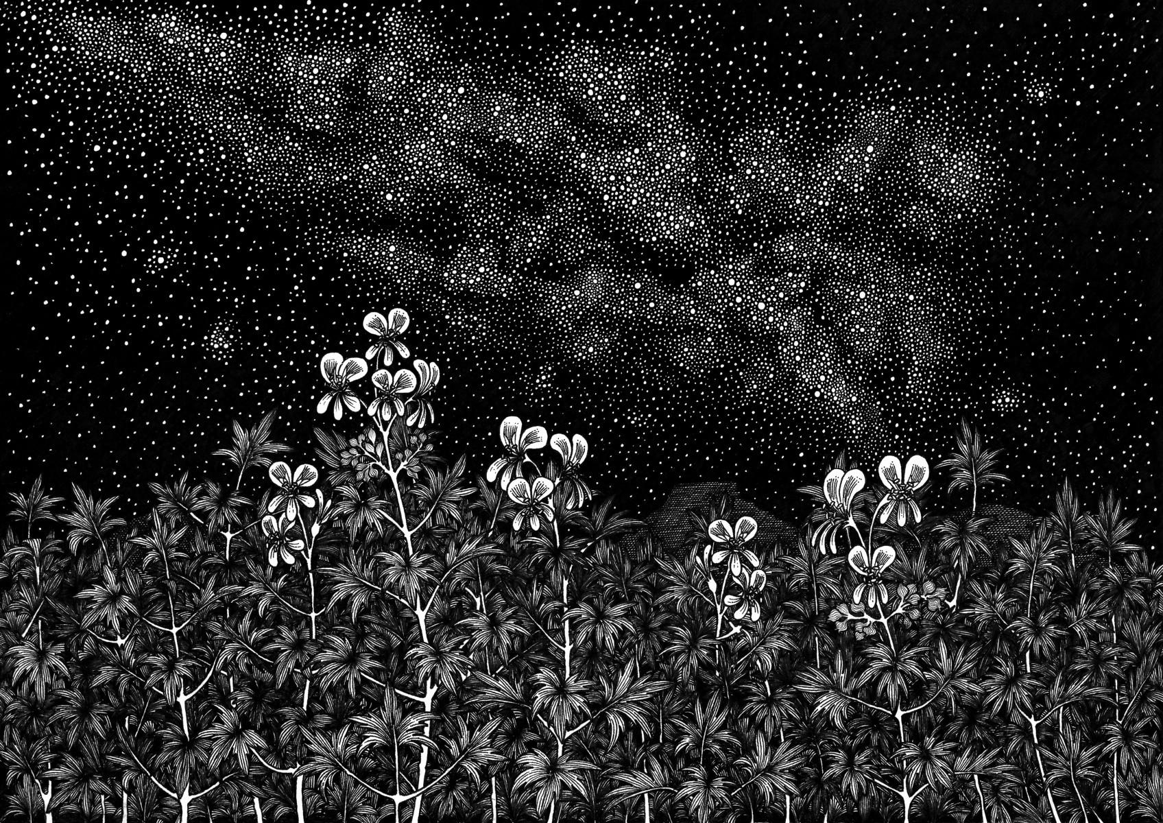 Pelargonium Flowers
